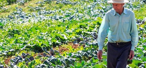 Umidade do solo favorece desenvolvimento das olerícolas
