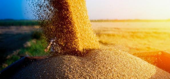 Safra 2020/21 confirma redução na produção de grãos