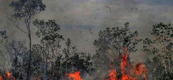 Incêndios causam hospitalização de 47 mil brasileiros ao ano