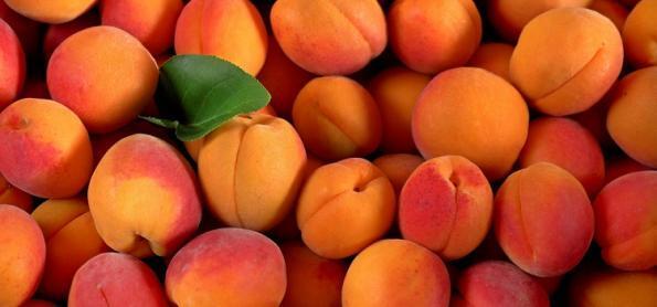 Cultivo de pêssego e nectarina no Brasil