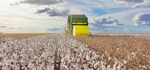 Produção de algodão deve crescer 20,3% na safra 21/22