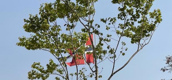 Árvore ameaçada de extinção consegue refúgio em embaixada