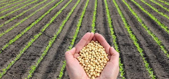 Paraná inicia plantio da soja, mas umidade é insuficiente