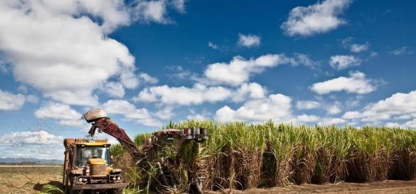 Clima impacta produção e produtividade da cana em SP