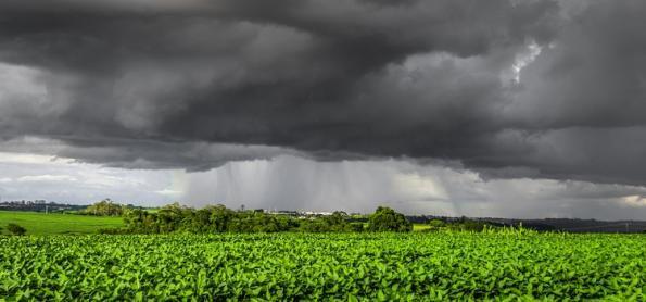 Chuva favorece o avanço da semeadura da soja em MT