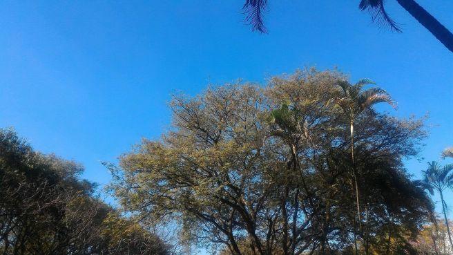 Sol, céu azul e 25 graus