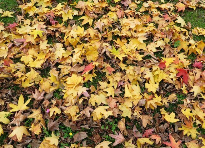 Enfim Outono