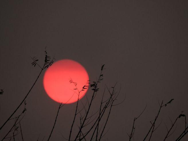 Sol Vermelho