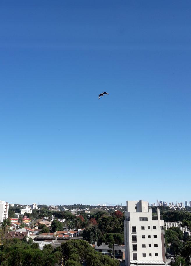 Voo no céu azul.