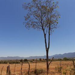 Previsão do tempo para hoje em Vargem Grande do Sul - SP ...